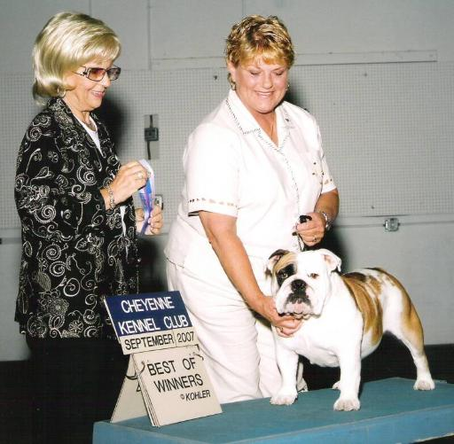 English bulldog stud service Ch. Miss hicks from the sticks Sired by Ch. Steelebull Catch Me If U Can