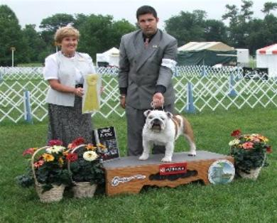 Champion bulldog, SHow pictures of Ch.steelebull Catch Me if u Can